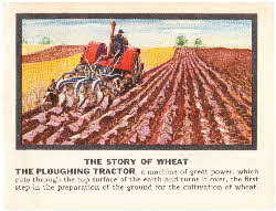 Force Story of Wheat cards 3