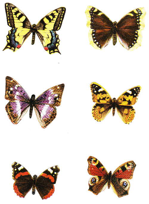1975 Ready Brek Butterfly Collection4