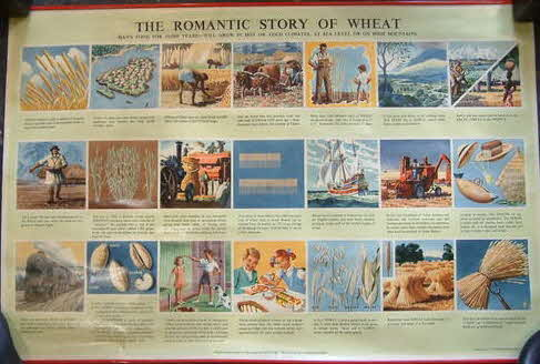 WEETABIX SCHOOL ADVERTISING POSTER SCHOOL STORY OF WHEAT - TUNNICLIFFE